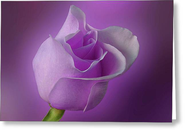 Mystical Purple Rose Greeting Card by Sandy Keeton