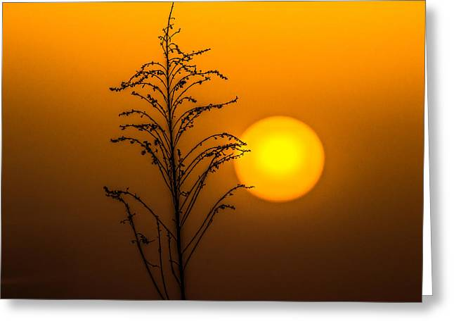Mystical Sunset Greeting Card by Shelby  Young