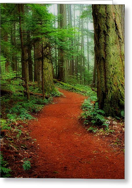 Mystical Trail Greeting Card