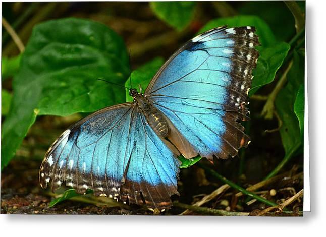 Mystical Wings Greeting Card by Fraida Gutovich