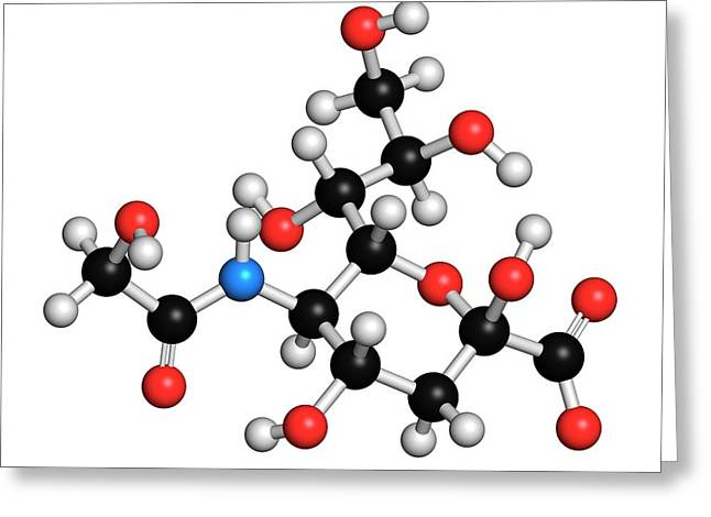 N-glycolylneuraminic Acid Molecule Greeting Card by Molekuul