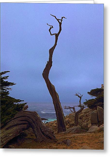 Naked And Exposed In Monterey Greeting Card