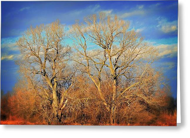 Naked Branches Greeting Card by Marty Koch