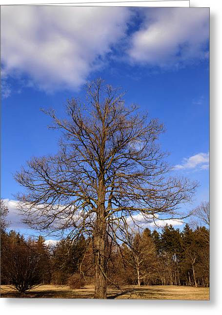 Naked Oak In Early Spring Greeting Card
