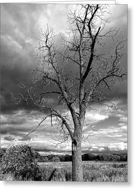 Naked Tree Greeting Card by Roger Swieringa