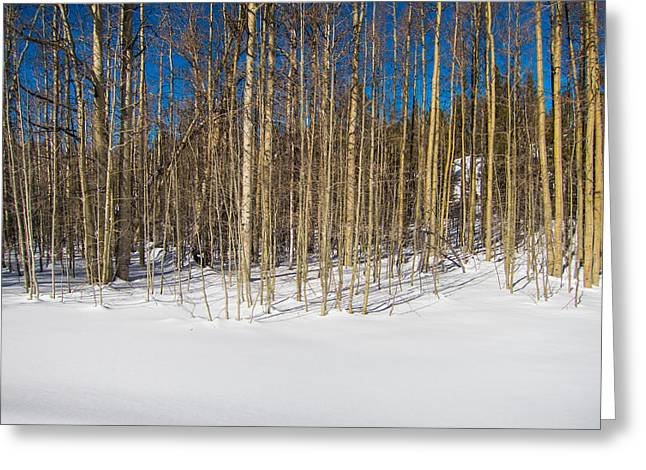Naked Wilderness Greeting Card by Mike Lee