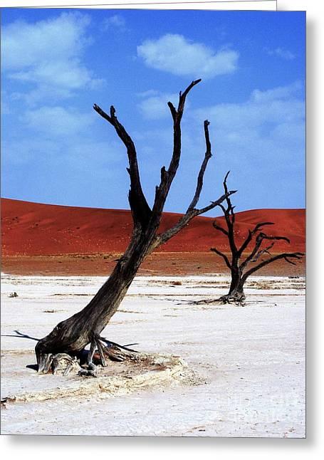Namib Naukluft Greeting Card by Noa Yerushalmi