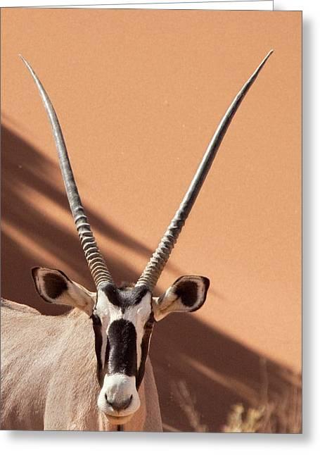 Namibia, Namib Desert, Sossusvlei Greeting Card by Jaynes Gallery