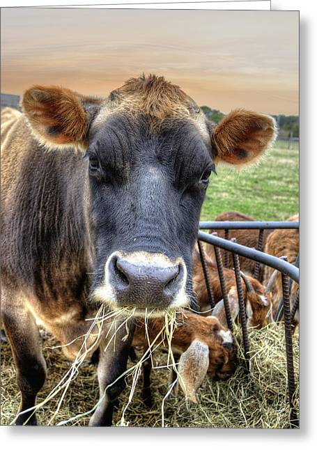 Nantucket Cow Greeting Card by Donna Doherty