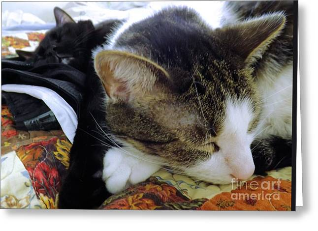 Nap Time Greeting Card