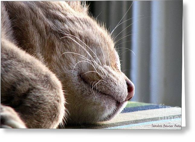 Greeting Card featuring the photograph Nap Time by Sandra Bauser Digital Art