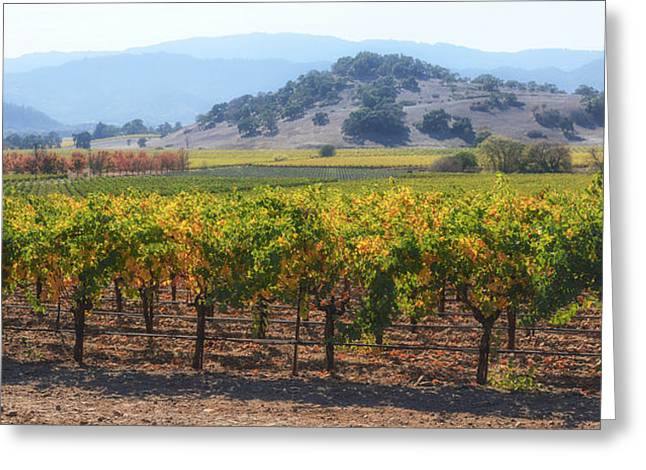 Napa Valley California Vineyard In Fall Autumn Greeting Card by Brandon Bourdages