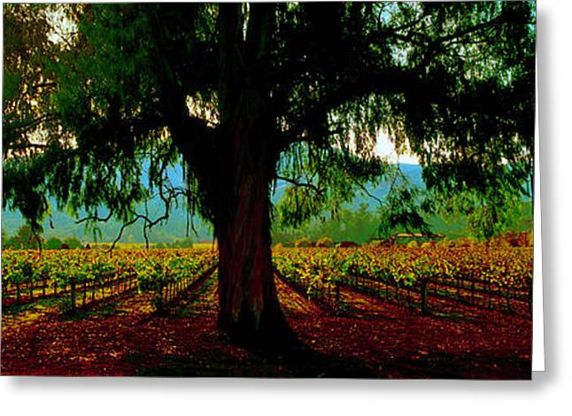 Napa Valley Winery Roadside Greeting Card