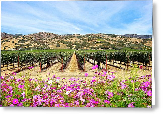 Napa Valley Vineyard With Cosmos Greeting Card