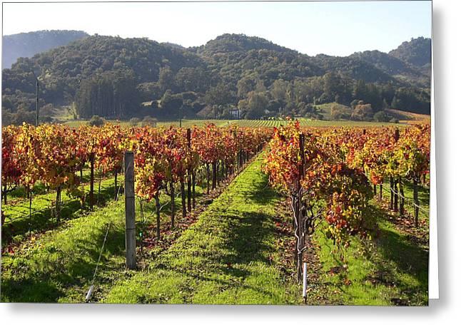 Napa Valley Vineyards Greeting Card by Armand Cabrera