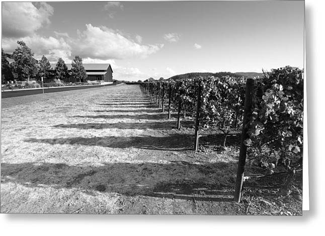 Napa Vine Rows Greeting Card by Paul Scolieri