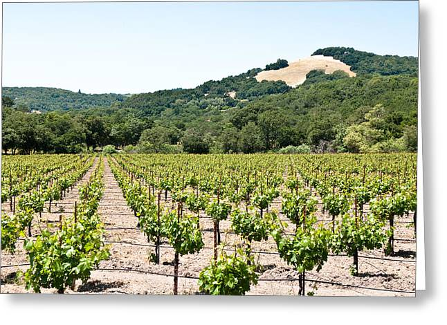 Napa Vineyard With Hills Greeting Card