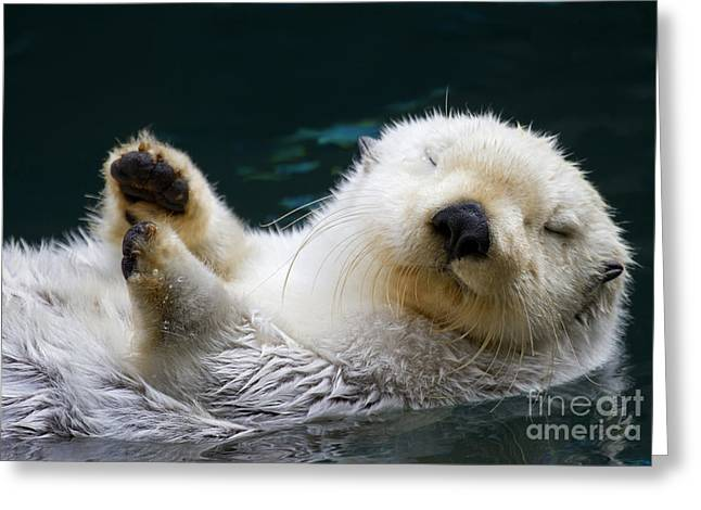 Napping On The Water Greeting Card by Mike  Dawson