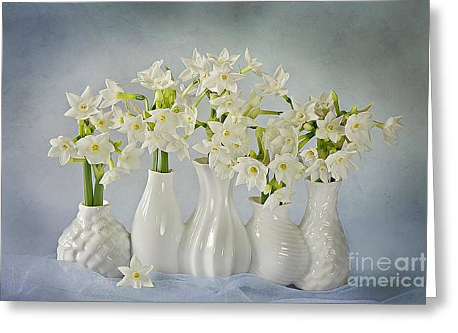 Narcissus 'paperwhites' Greeting Card by Jacky Parker