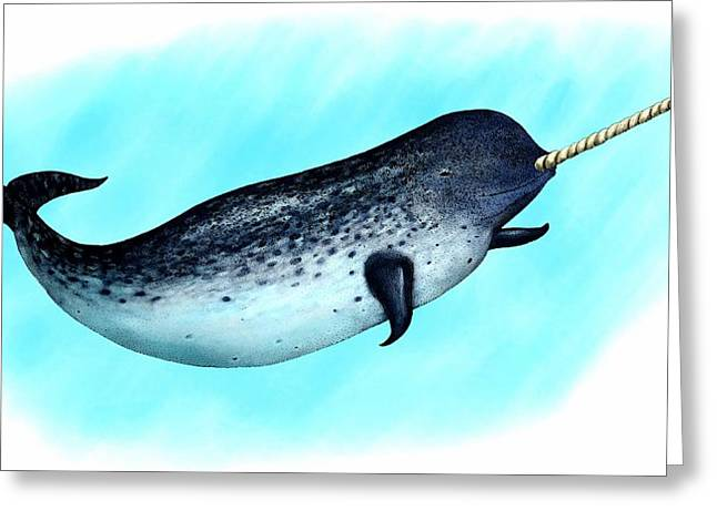 Narwhal Whale Greeting Card by Roger Hall