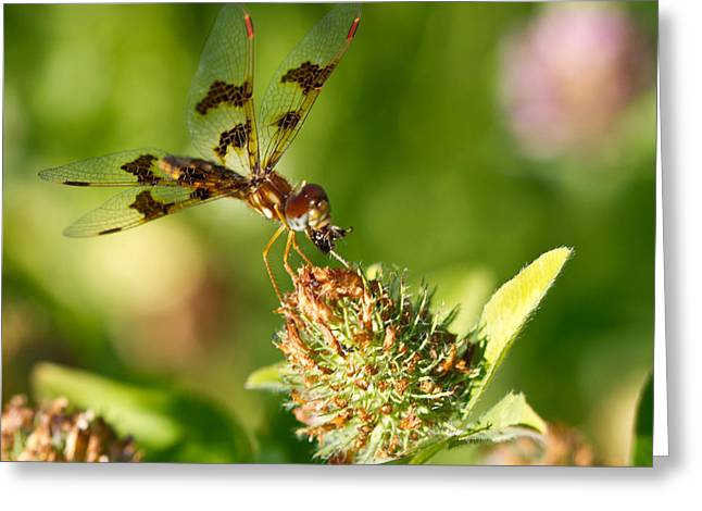 Greeting Card featuring the photograph Nashoba Winery Dragonfly by John Hoey