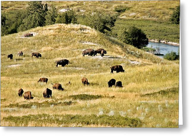 National Bison Range Moiese Mt Greeting Card