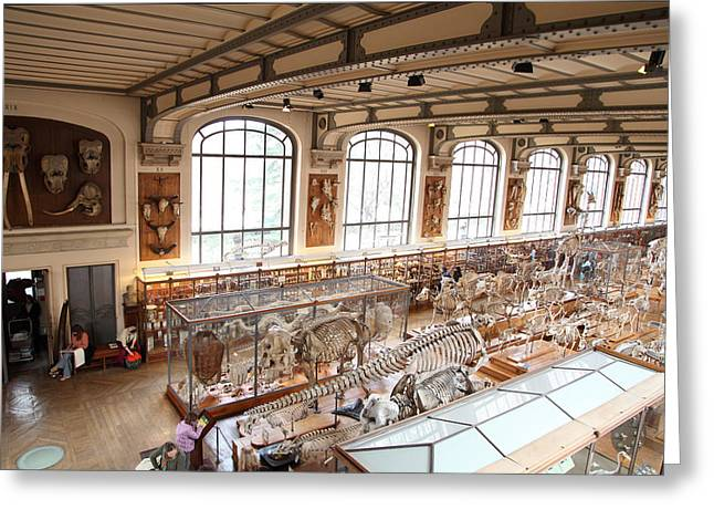 National Museum Of Natural History - Paris France - 011316 Greeting Card by DC Photographer