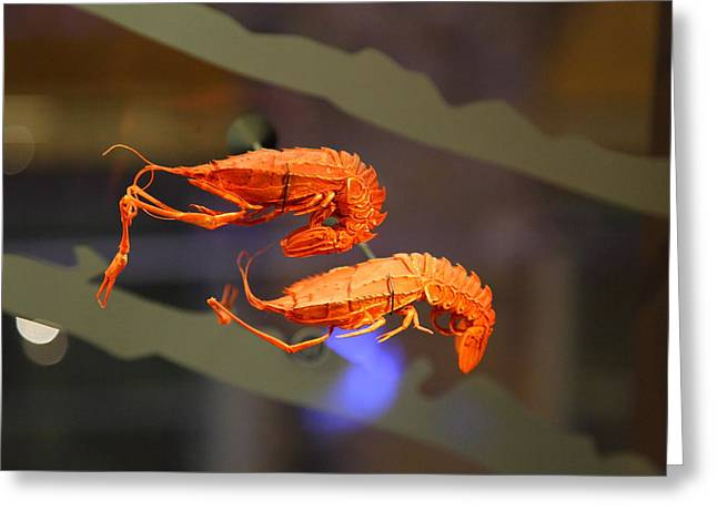 National Museum Of Natural History - Paris France - 011341 Greeting Card by DC Photographer