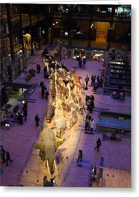 National Museum Of Natural History - Paris France - 011353 Greeting Card by DC Photographer