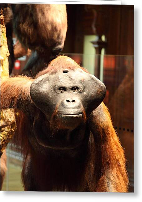 National Museum Of Natural History - Paris France - 011357 Greeting Card by DC Photographer