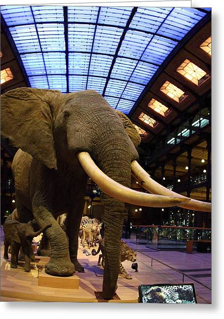 National Museum Of Natural History - Paris France - 011379 Greeting Card by DC Photographer