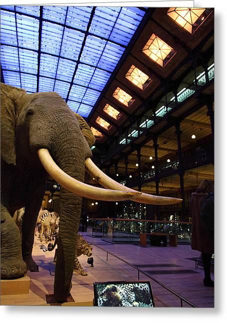 National Museum Of Natural History - Paris France - 011381 Greeting Card