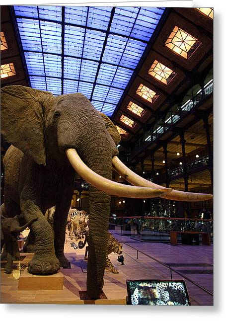 National Museum Of Natural History - Paris France - 011382 Greeting Card by DC Photographer