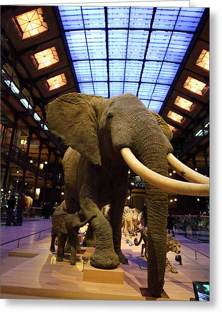 National Museum Of Natural History - Paris France - 011383 Greeting Card by DC Photographer