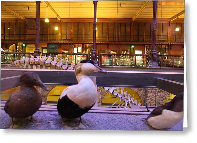 National Museum Of Natural History - Paris France - 011389 Greeting Card by DC Photographer
