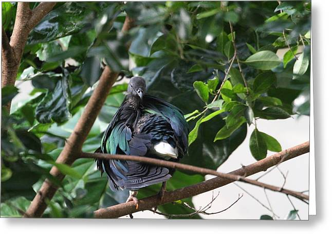 National Zoo - Birds - 011325 Greeting Card by DC Photographer