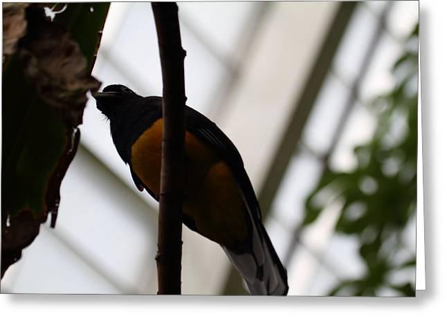 National Zoo - Birds - 011351 Greeting Card