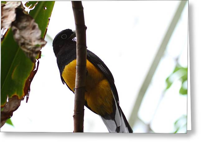 National Zoo - Birds - 011353 Greeting Card by DC Photographer
