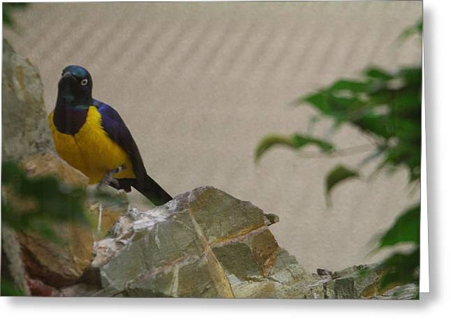 National Zoo - Birds - 01137 Greeting Card by DC Photographer