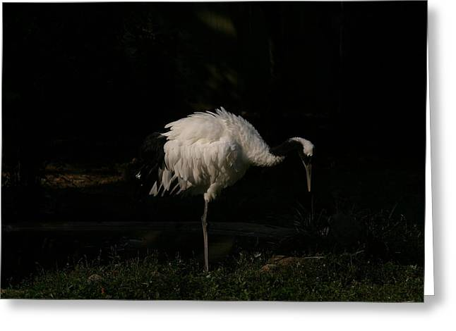 National Zoo - Birds - 121211 Greeting Card by DC Photographer