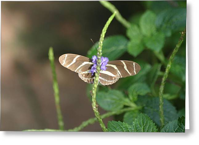 National Zoo - Butterfly - 12122 Greeting Card by DC Photographer