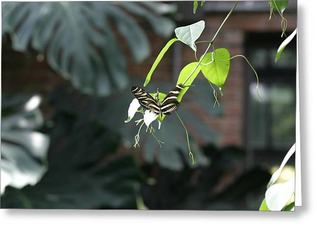 National Zoo - Butterfly - 12124 Greeting Card by DC Photographer