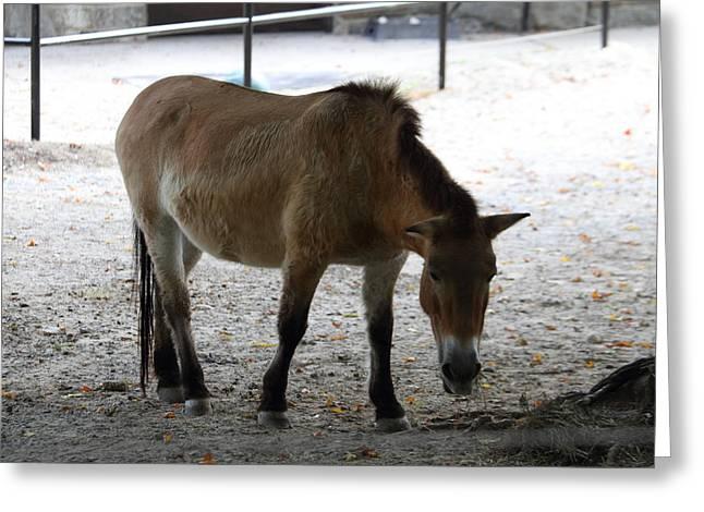 National Zoo - Donkey - 01131 Greeting Card
