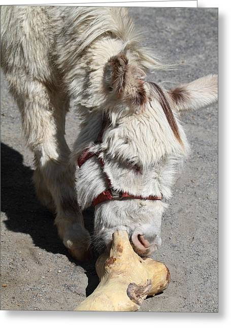 National Zoo - Donkey - 01138 Greeting Card by DC Photographer