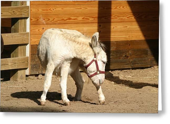 National Zoo - Donkey - 12125 Greeting Card