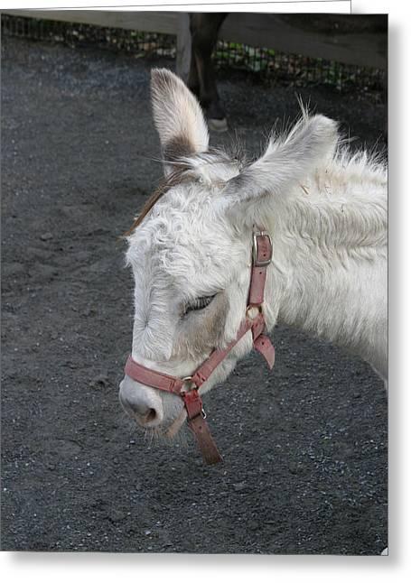 National Zoo - Donkey - 12128 Greeting Card