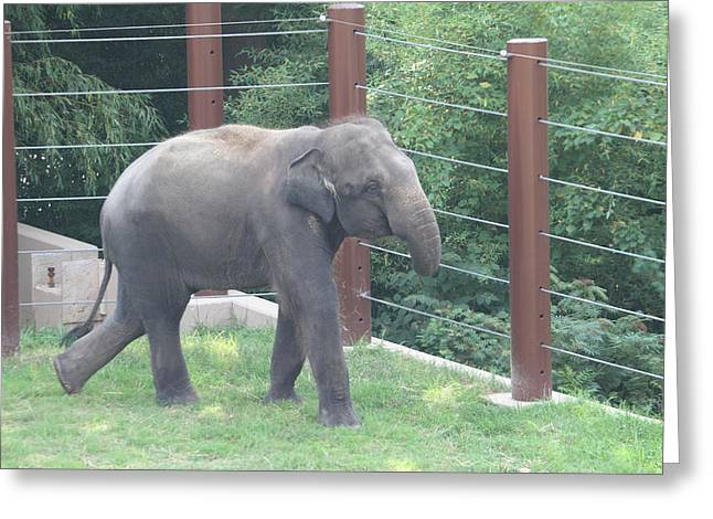 National Zoo - Elephant - 01131 Greeting Card by DC Photographer
