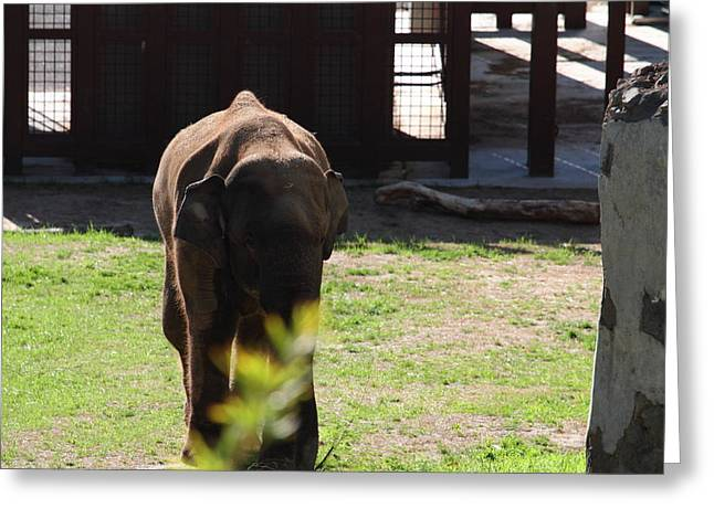 National Zoo - Elephant - 011314 Greeting Card by DC Photographer