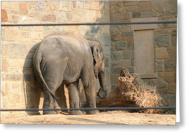 National Zoo - Elephant - 12128 Greeting Card by DC Photographer