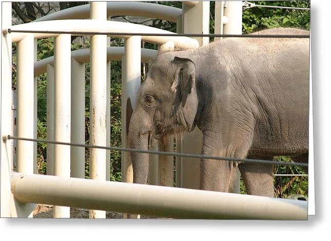 National Zoo - Elephant - 12129 Greeting Card by DC Photographer